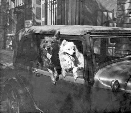 De Ford en de honden van Fick (originele foto: Collectie Bert Rompa)